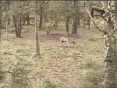 Fallow Deer Cam from New Forest (Lyndhurst, UK) Warning!!! You will see animal corpses here! - Page 2 Snap463-1