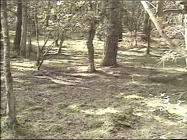 Fallow Deer Cam from New Forest (Lyndhurst, UK) Warning!!! You will see animal corpses here! - Page 2 Untitled00-01-38762
