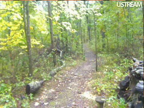 Deer Trail Cam from Minnesota Snap404