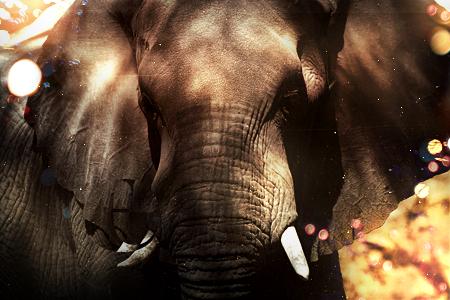 54° FDLS[Votaciones] Elefante