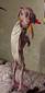 Ancient Hogwarts-Afiliación Élite-Foro recien abierto-Época de los Fundadores 41x85