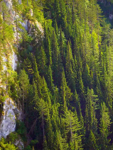 Slike  Planine,prirode,naseg kraja PANCICEVAHOMORIKA-1