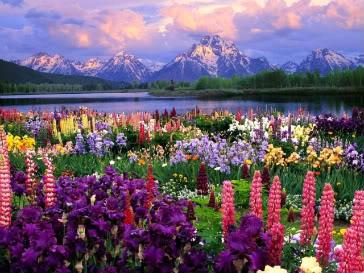 The Field Of Flowers Field-of-flowers-02
