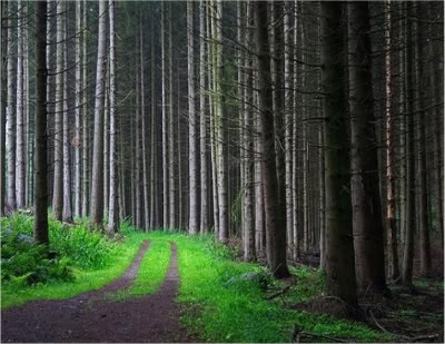 Along the Forbidden Forest Forest_road_picture_mystery