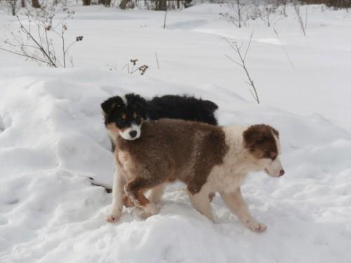 Мои собаки: Зена и Шива и их друзья весты 6bd83f6ca28b6f7fad4abf61613469f0