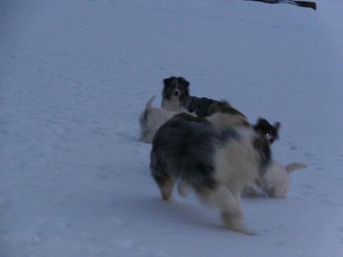 Мои собаки: Зена и Шива и их друзья весты - Страница 2 Be870e74630af4209681f58b1dc3f534