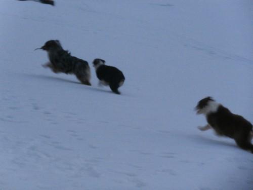 Мои собаки: Зена и Шива и их друзья весты - Страница 2 661eff30b98fe094ee2b82edb3ef59f4