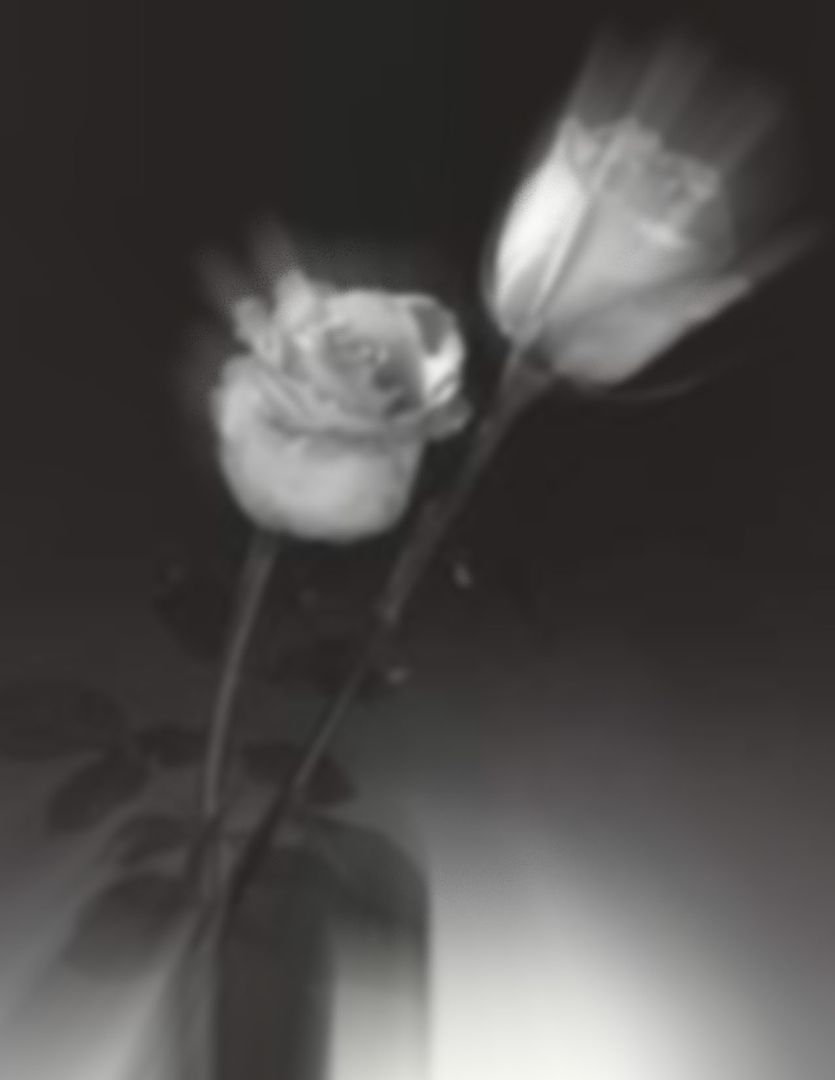 buonanotte - Pagina 2 Rosa