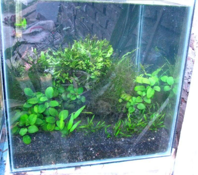 Plantados externos IMG_0841