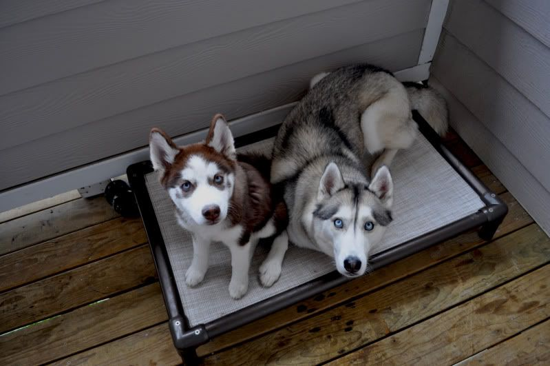 Scrapbook: Rogue and Koda. *updated 9/13* - Page 4 002-3