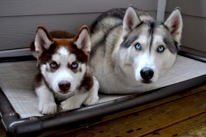 Scrapbook: Rogue and Koda. *updated 9/13* - Page 4 004-2