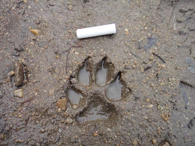 Colorado -- Sluicing Cache Creek -- 15 Apr 2016 DSC08427_zpst12r4pkb
