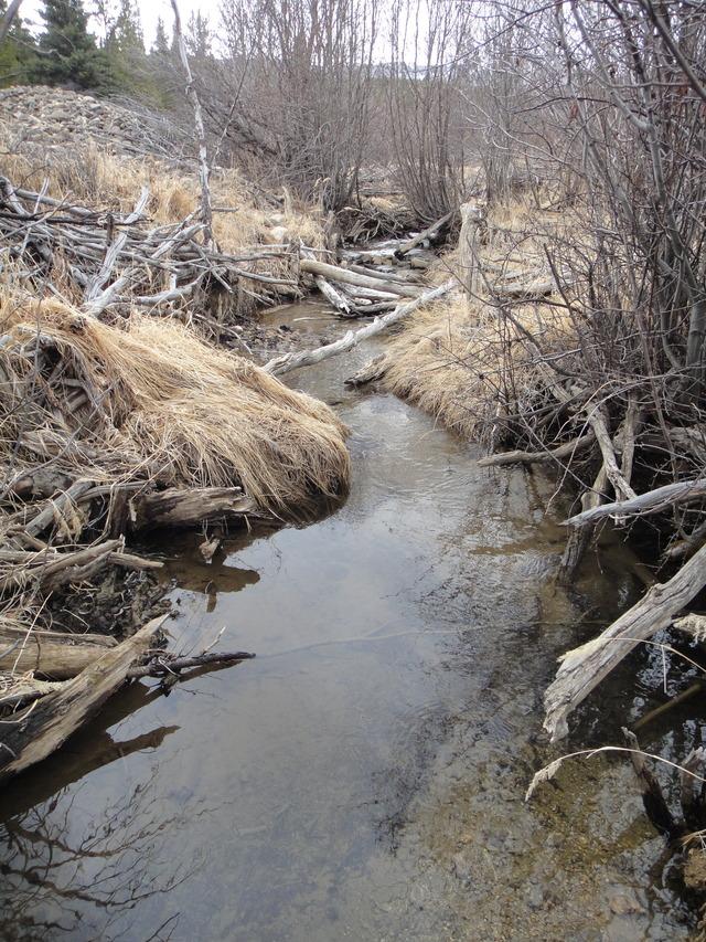 Colorado -- Sluicing Cache Creek -- 15 Apr 2016 DSC08437_zpscizjyu5r