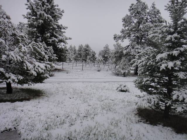 Colorado -- Sluicing Cache Creek -- 17 May 2017 DSC09601_zpsnj592coa