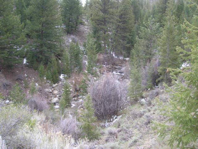 Colorado -- Prospecting a Remote High Mountian Creek 005_zpse4a8af47