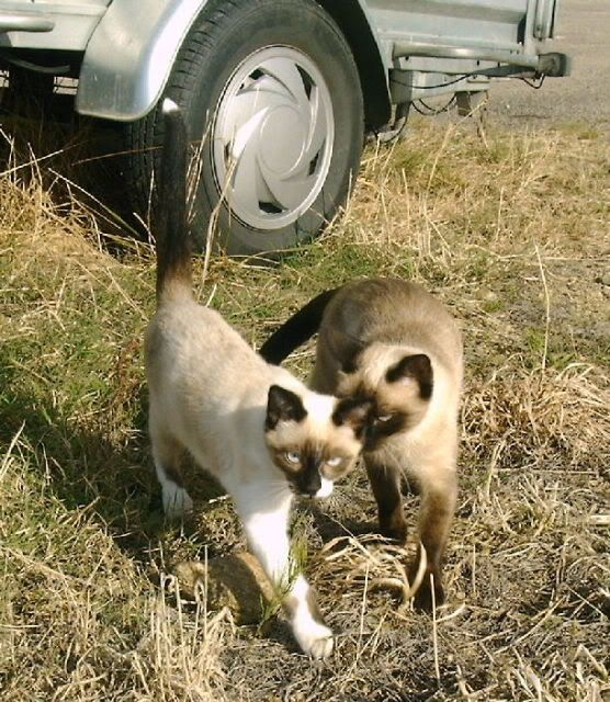 Mes chats Leschats41