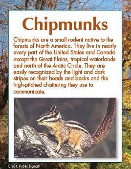 Paws Fur Nature: Chipmunks Chipmunks