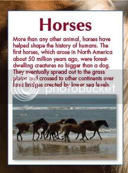 New Paws Fur Nature : Horses Horses
