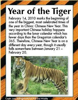 Paws Fur Nature: Year of the Tiger Tigeryear