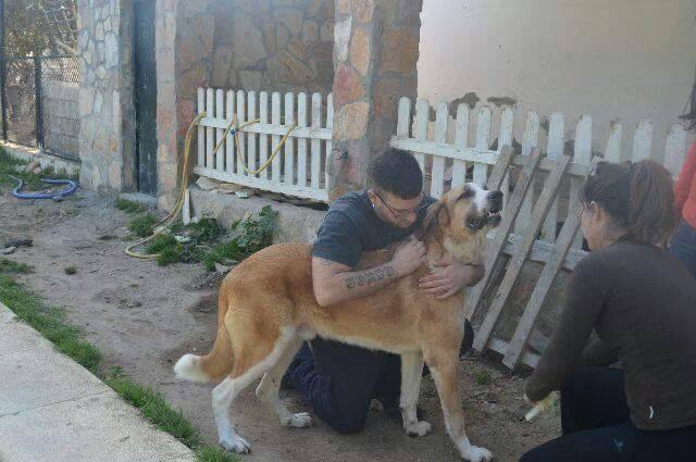 Canis Thor 1079182_10203566438990850_903911098_n