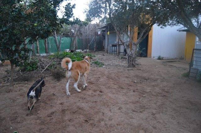Canis Thor 1797268_10203276356818977_322837112_n