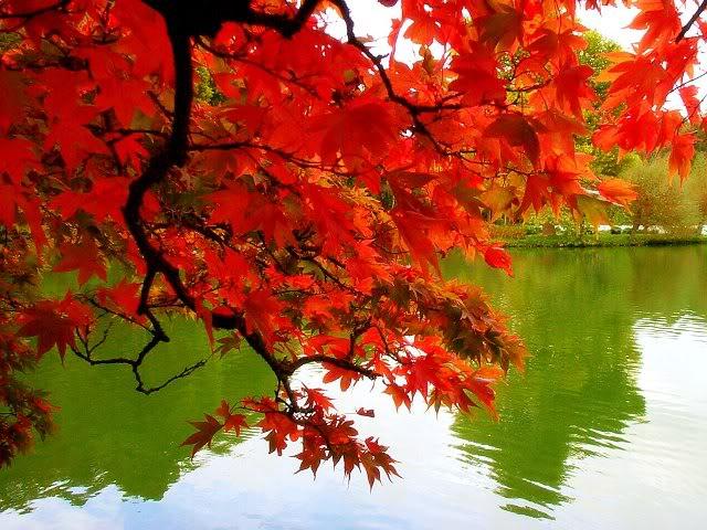 Slike za danas - Page 2 Fall-autumn-1