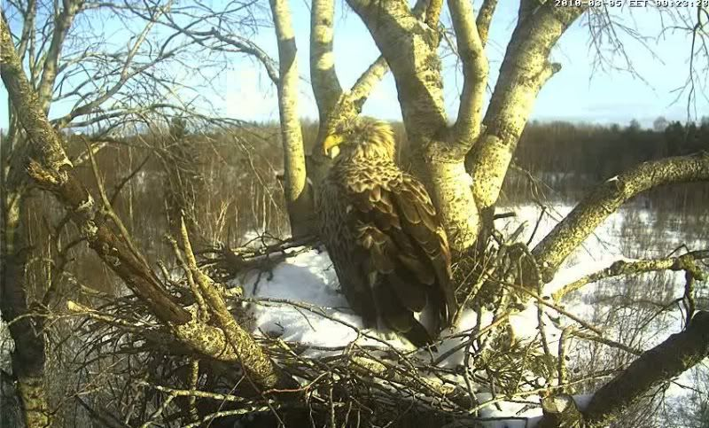 White-tailed Eagle Camera Lovers - Page 2 1003050820007