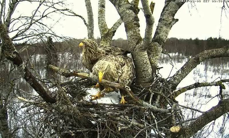 White-tailed Eagle Camera Lovers - Page 3 1003080858015