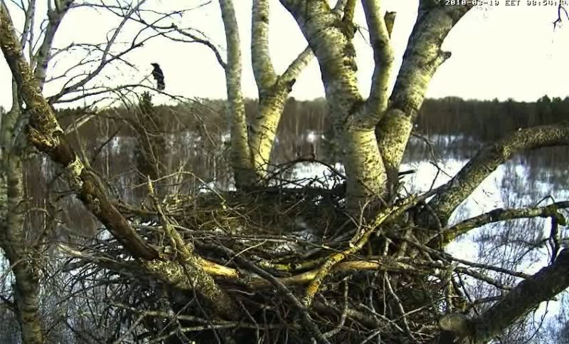 White-tailed Eagle Camera Lovers - Page 3 1003100755055