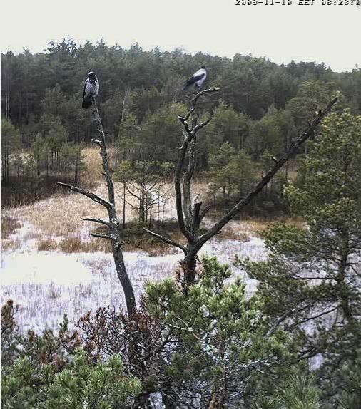 EAGLE WINTER FEEDING GROUND CAMERAS Snap495