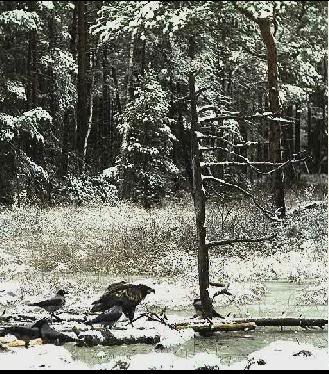 EAGLE WINTER FEEDING GROUND CAMERAS Snap503