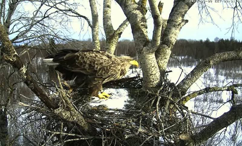 White-tailed Eagle Camera Lovers - Page 2 Untitled001-2