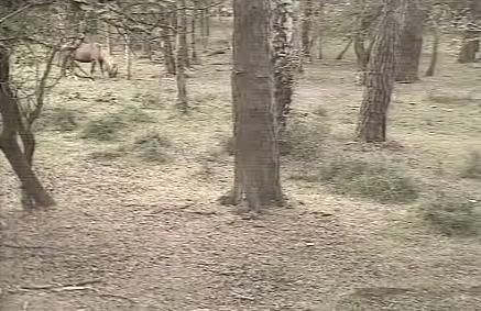 Fallow Deer Cam from New Forest (Lyndhurst, UK) Warning!!! You will see animal corpses here! Snap331