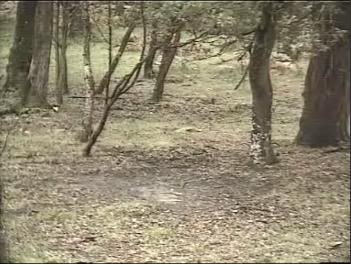 Fallow Deer Cam from New Forest (Lyndhurst, UK) Warning!!! You will see animal corpses here! Snap387