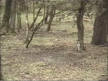 Fallow Deer Cam from New Forest (Lyndhurst, UK) Warning!!! You will see animal corpses here! Snap392