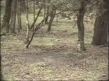 Fallow Deer Cam from New Forest (Lyndhurst, UK) Warning!!! You will see animal corpses here! Snap393