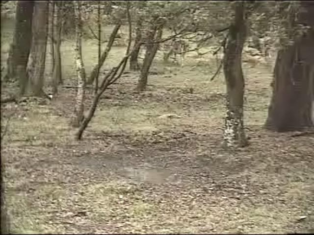 Fallow Deer Cam from New Forest (Lyndhurst, UK) Warning!!! You will see animal corpses here! Snap491