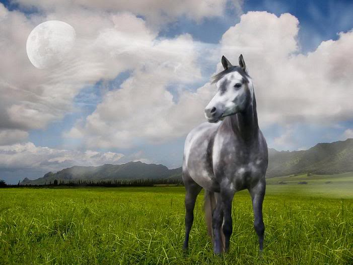Ash Storm the Lead Stallion GreyHorse