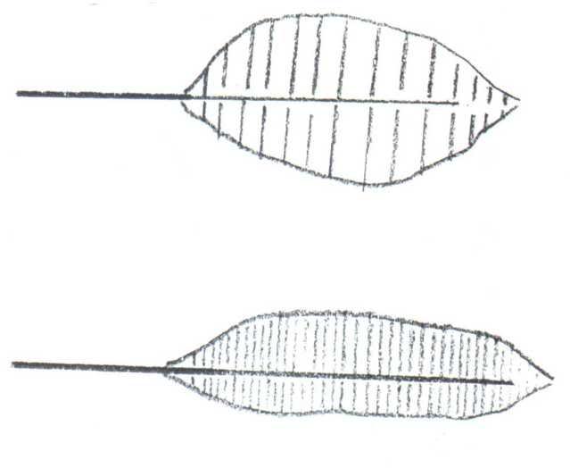 How to make simple Palm Trees. Palmtree7