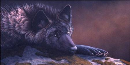 New Beginnings: A Clean Slate. (Tag: Eclipse + Others). The_beauty_of_a_black_wolf_by_timberwolf1-d5sa7ql_zps2668e53d