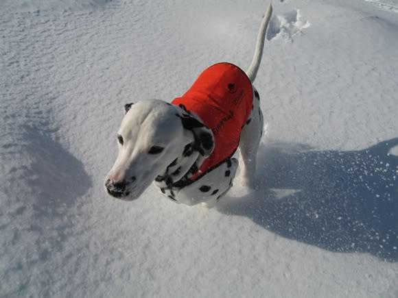 [avsluttet] Fotokonk. Februar - Lek i snø IMG_0004_1