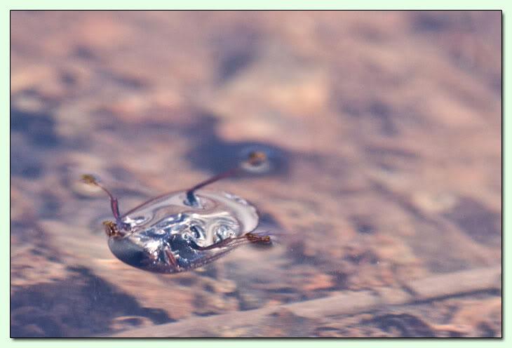Monterano e i piccoli mostri CMY609-D011