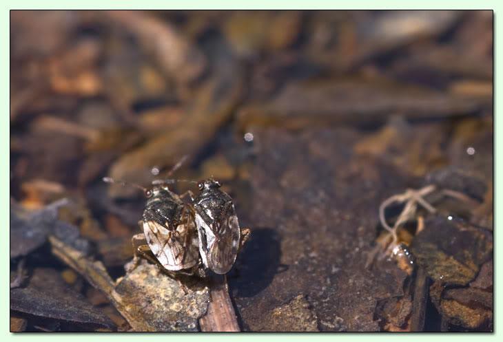 Monterano e i piccoli mostri CMY609-D016
