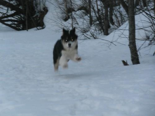 Мои собаки: Зена и Шива и их друзья весты - Страница 2 015c2fc839406556671e878c497e0473
