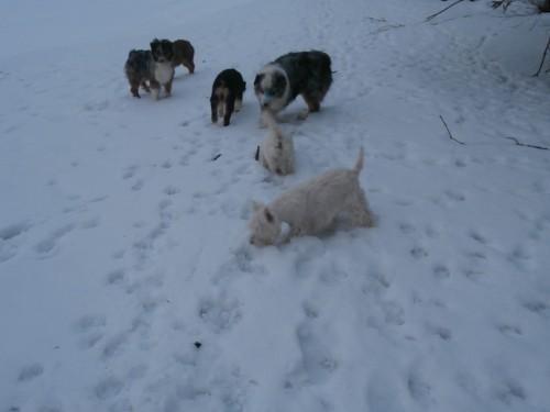 Мои собаки: Зена и Шива и их друзья весты - Страница 2 953e8d4f3b130fe9c669a1470760c789