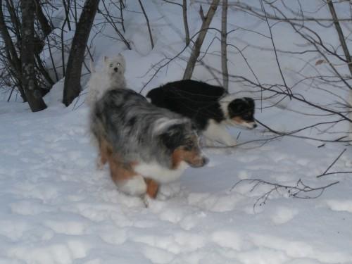 Мои собаки: Зена и Шива и их друзья весты - Страница 2 6059593b97e5aefd1d956878afe223e5