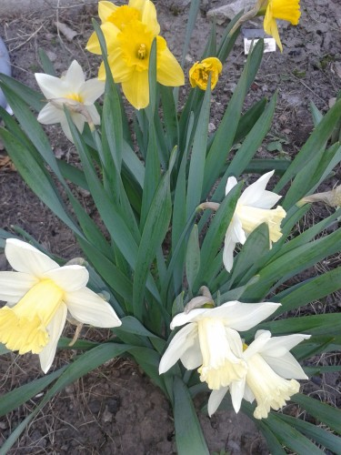 И у цветов весна)) 4a1560d468ed3d41a85cae2c8304f4d8