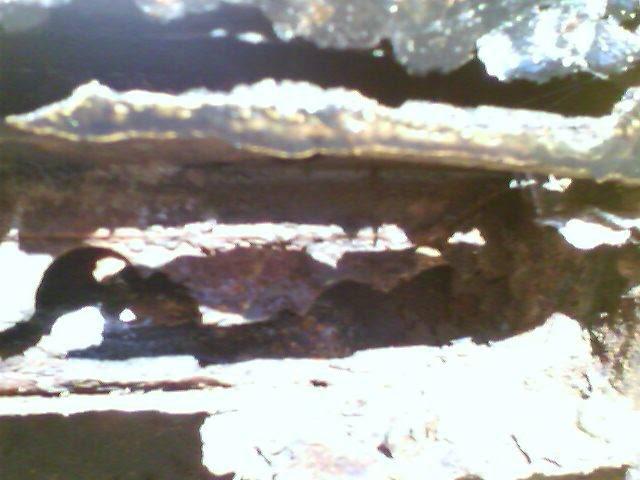 Beetlebums Panel Phonepics065