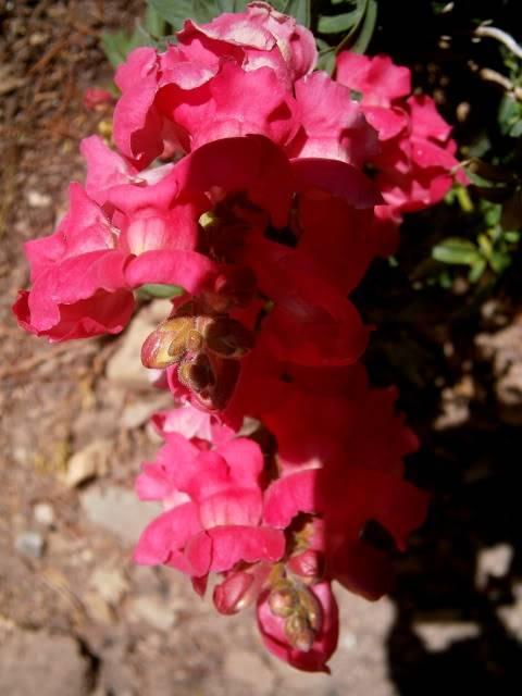 Flores de Abril P2150015
