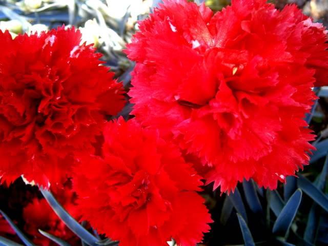 Flores de Abril P3220025